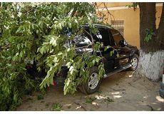 За ніч у Черкасах впало 6 дерев